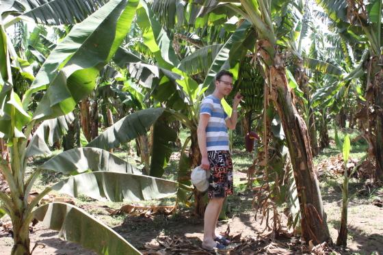 Ģirts banānu plantācijā.
