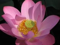 Vienotības Meditācijas programma